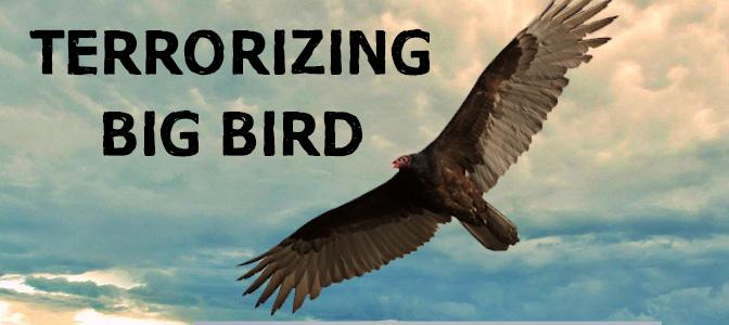 Terrorizing Big Bird – Harlingen, Texas