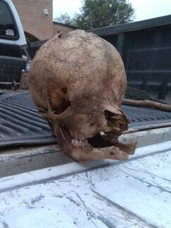 bigfoot skull