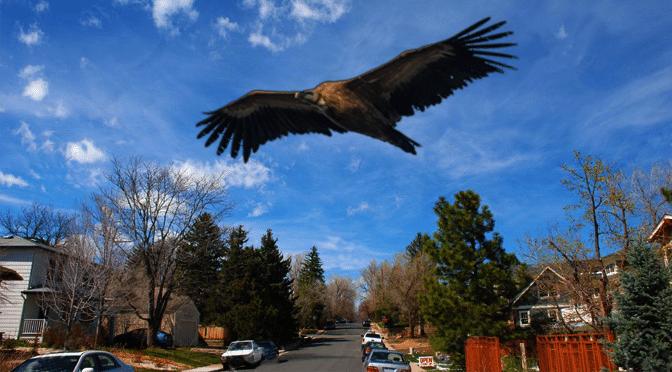 Man May Have Seen The Infamous Texas Big Bird – Houston, Texas
